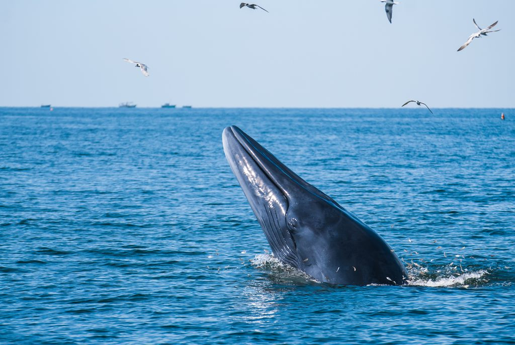 Humane Society International/Canada hails landmark victory as Canada bans whale, dolphin and porpoise captivity - Humane Society International