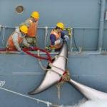 Japanese whaling