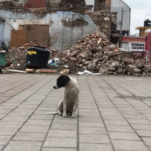 Dog in front of rubble