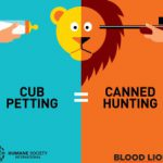 Lion exploitation graphic