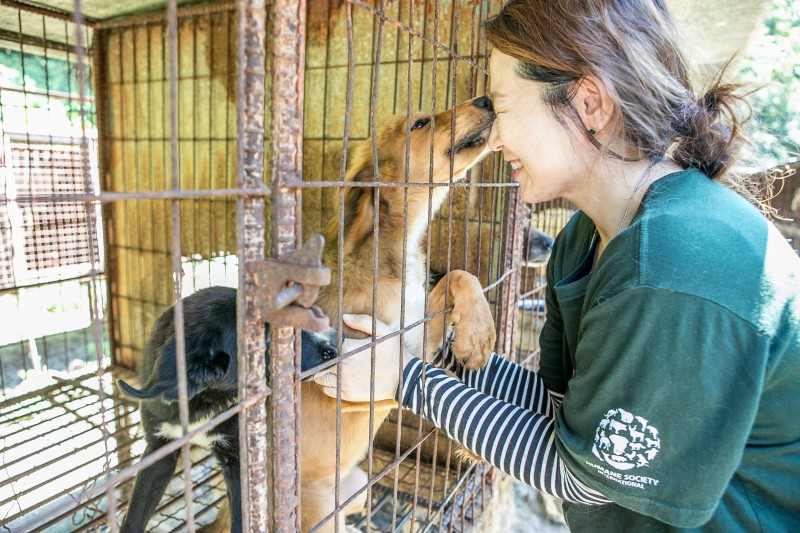 Dog rescued from a dog meat farm