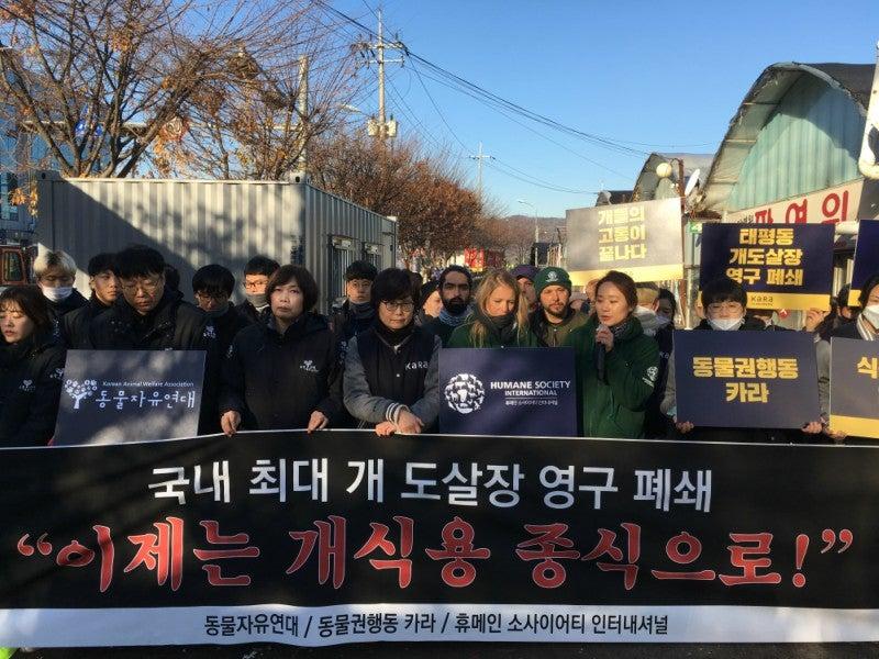 Korea dog meat protest