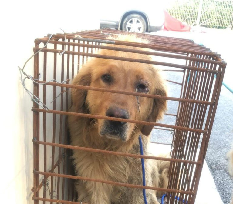 Dog rescued from a slaughterhouse