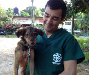 HSI veterinarian with puppy