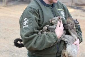 Australia fires animal rescue