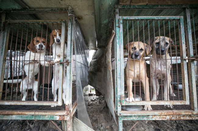 A dog meat farm
