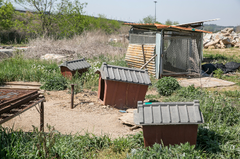 A dog meat farm
