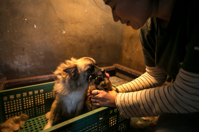 Honey and her puppy on a dog meat farm