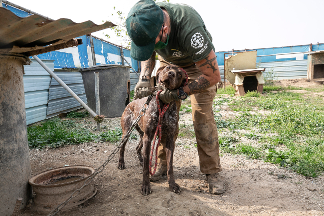 Shutting down a dog meat farm