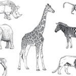 Drawings of animals