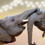 Elephant ecard