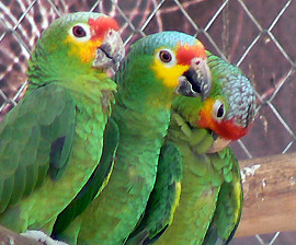 Parrots at a Rescue Center