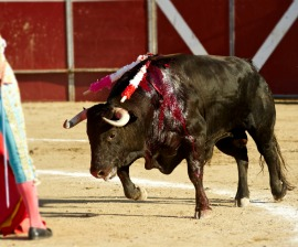 bloody bull bymajed khalil bullfighter frascuelo fights a bloody bull ...