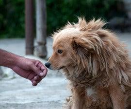 Adopting And Transporting Pets Internationally Humane Society International