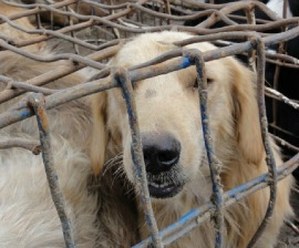 Dog meat victim
