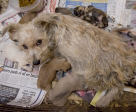 Take Action To Stop Puppy Mills Humane Society International
