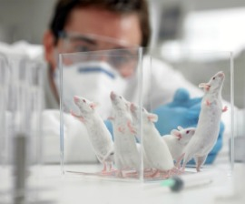 Animal research papers