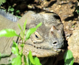 hsi trains officials to help illegally traded wildlife in el