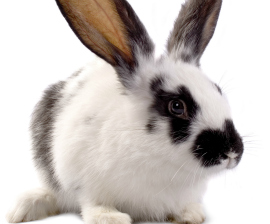 about cosmetics animal testing humane society international about cosmetics animal testing