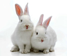 #BeCrueltyFree Brazil Welcomes Proposal to Create Air-Tight Ban on Cosmetics Animal Testing in Brazil