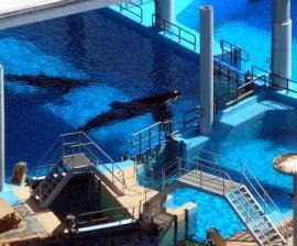marine animals in captivity essays