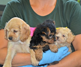 Rescue Dogs Ready to Leave Shelter and Find Forever Homes : Humane Society International
